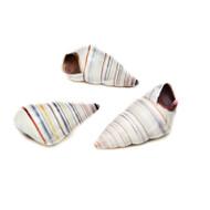 Candy Landsnail - Seashell