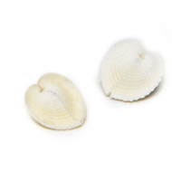 Heart Cockles - Seashell