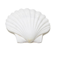 Great Scallop - Seashell