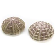 Mushroom Urchin - Seashell