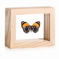 Aegina Number-wing Butterfly - Callicore lyca aegina (Underside)