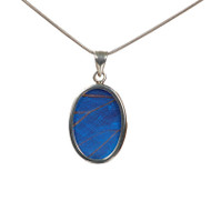 Butterfly Necklace - Morpho didius