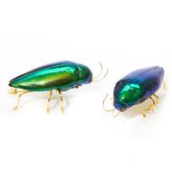 Beetle Brooch - Sternocera aequisignata