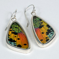 Moth Earrings - Urania ripheus