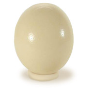 Ostrich Egg