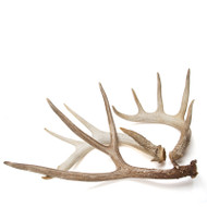 Deer Antler