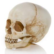 Child Skull Angle