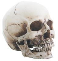 Small Skull Head