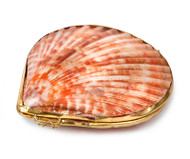 Shell Coin Purse - Pecten senatoria