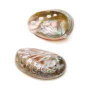 Polished Red Abalone - Thumbnail