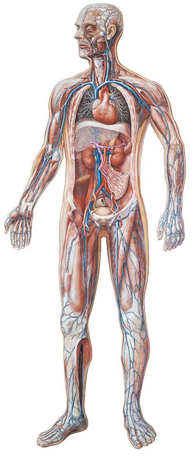 Vascular System Evolution Store