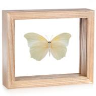 Anteos clorinde (Underside) - Natural Frame