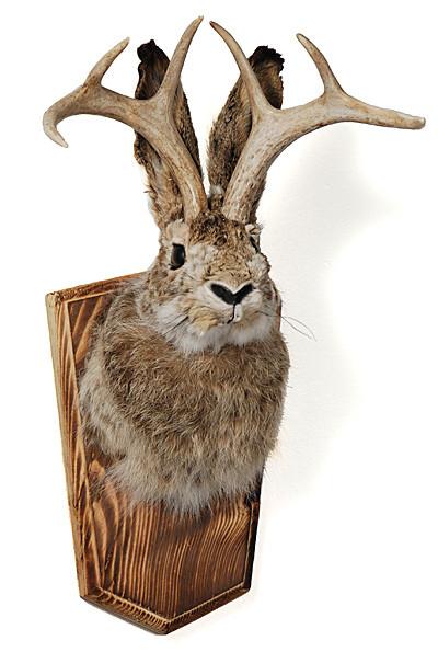 sholder mount jackalope evolution store