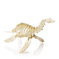 Tiny Plesiosaurus
