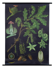 Oak Botanical Poster