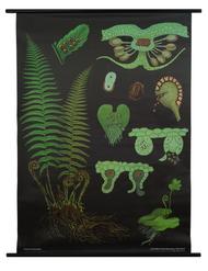Male Fern Botanical Poster