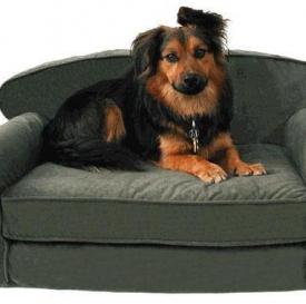 Dog Furniture