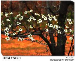 Dogwood at Sunset Canvas Wall Art