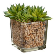 SUCCULENTS IN GLASS CUBE W/PEBBLES