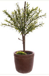 "MYRTLE BALL TOPIARY 18"" GREEN"