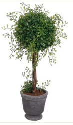 TOPIARY ANGEL VINE 20""