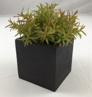 GRASS IN BLAC K MACHE POT 5""