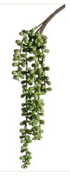 STRING OF PEARLS SUCCULENT 13""