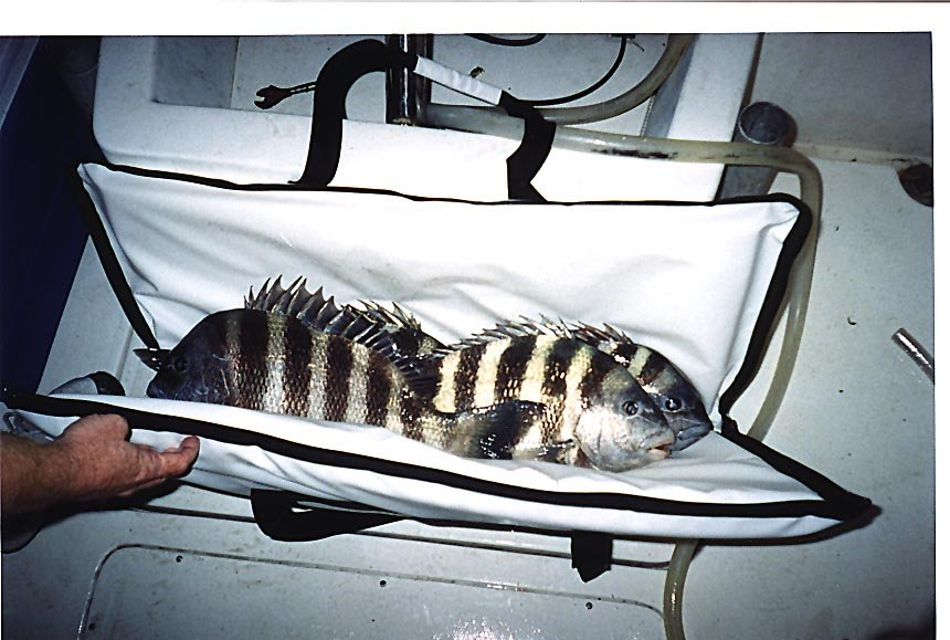 inshore-bag-with-fish.jpg