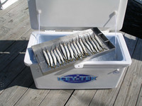 Carolina Bait Tray CBT128 35x14x1.5