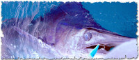Frenzy Tackle Angry Popper 4 oz. Blue Glow