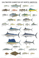 Scott and Nix Saltwater Fish Poster - Black Framed