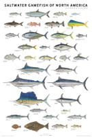 Scott and Nix Saltwater Fish Poster - Unframed