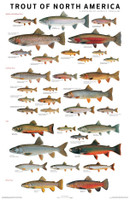 Scott and Nix Trout Poster - Black Framed