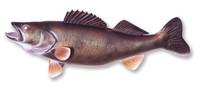 Taxidermy - Walleye Replica 29 inch