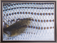 Jay Fleming Print Unframed - Striped Bass Scales 14 x 20