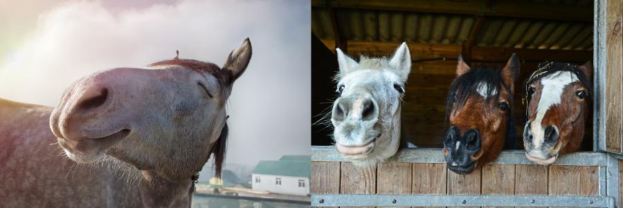 dinovite-for-horses-headers.png