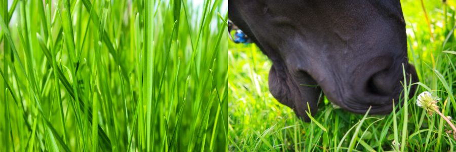 horse eating lush pasture
