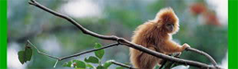 Smudgy Monkey