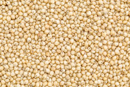 Jalpur - Whole Sorghum Seeds (Juwar Whole) - 100g