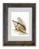5 x 7 Mollusk Shell Wall Art Print by Dotty Reiman in an 8 x 10 inch rustic barn wood frame