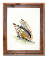 8 x 10 Mollusk Shell Wall Art Print by Dotty Reiman in an 11 x 14 inch rustic barn wood frame