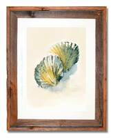 8 x 10 inch  seashell watercolor painting by Dotty Reiman titled Seaglass Scallop in an 11 x 14 inch barn wood frame