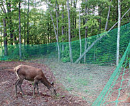 Deer Fence Mesh Green