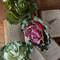 Cabbage Pick (3 Colours)