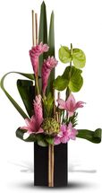 our-promise-pink-ginger-green-antherium.jpg