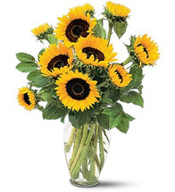 Shining Sunflowers  showcases sunflowers and foliage in a clear glass vase in Rockville MD, Palace Florists