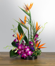 Tropical Memories showcases birds of paradise, dendrobium orchids and foliage in a low dish in Washington DC, Palace Florists