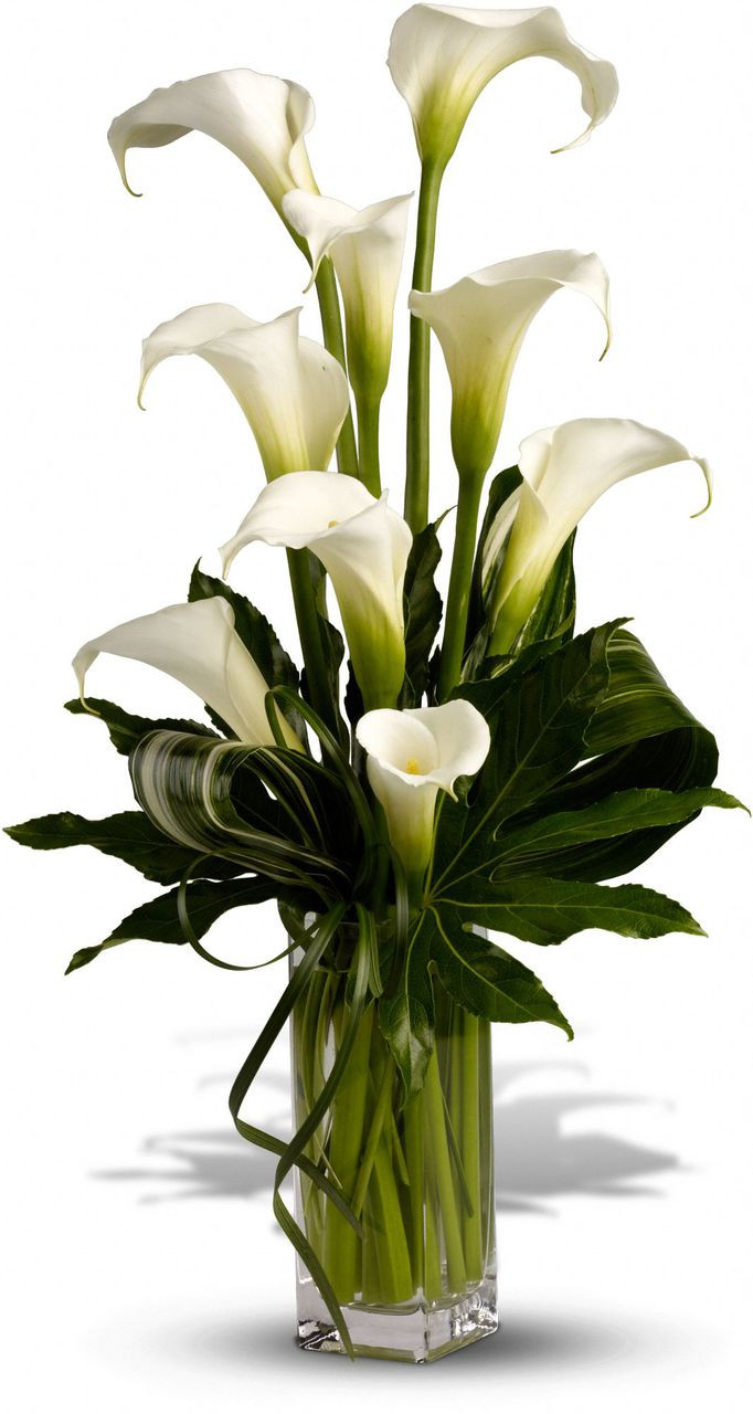 Calla lily flower arrangements flower delivery rockville md calla lilies flower arrangement washington dc rockville palace florists izmirmasajfo Image collections