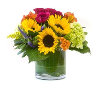 Bright and Sunny showcases sunflowers, orange solotia, pink spray roses and green hydrangea in a leaf wrap cylinder in Rockville MD, Palace Florists
