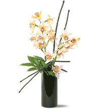 Artful Orchids showcasing white cymbidium orchids with river cane in a black cylinder in Washington DC and Rockville MD, Palace Florists